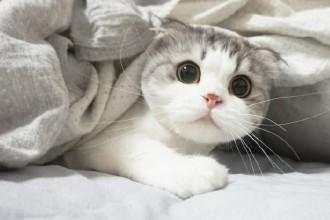 你家宠物萌不萌?宠物摄影的九个技巧